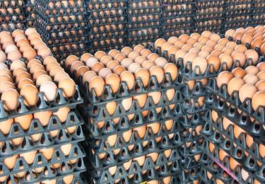 COVID-19 heeft een grote impact op de EU export en import van eieren