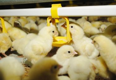 Sterke daling van het antibioticagebruik in de veehouderij, doch slechts 1 op 3 reductiedoestelling gehaald