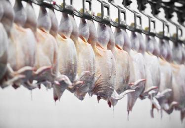Uitstel van betaling verleend aan vleeskuikenslachterij GPS